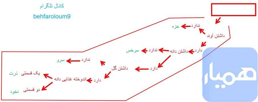 فعالیت صفحه 139 علوم نهم